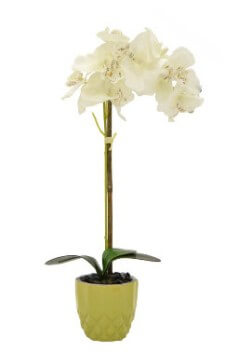 Three Hands 20-Inch Orchid Arrangement in Lime Planter